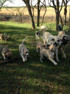 puppies 2016